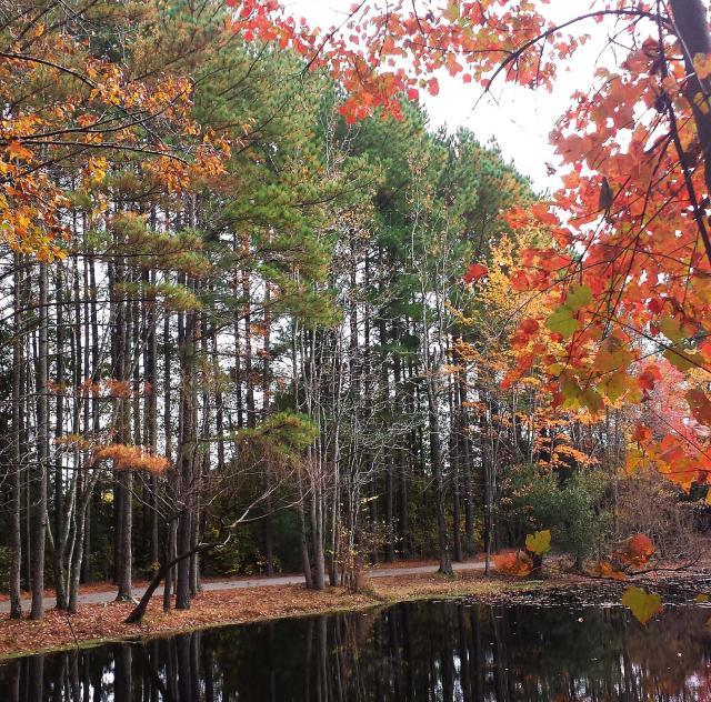Clayton-community-park-fall 2000x1500 72dpi