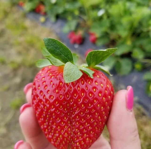 J & L Produce strawberry