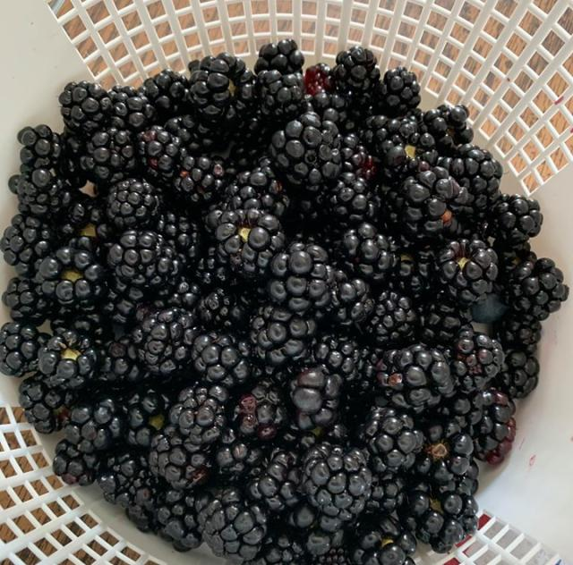 Ronnies blackberries