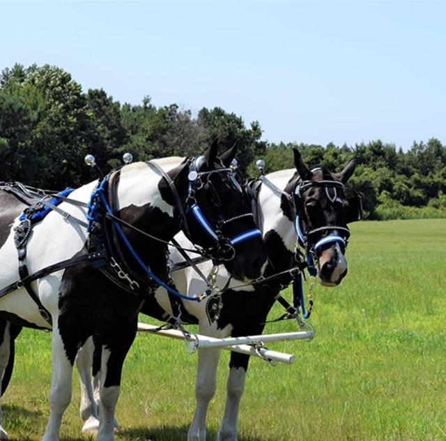 Southern Charm Carriages