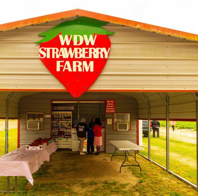 WDW Strawberries Stand 2000x1500 72dpi