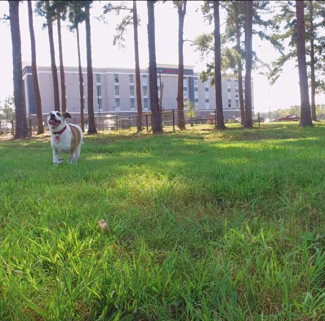 Benson Dog Park