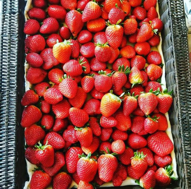 Fresh Strawberries from the Field