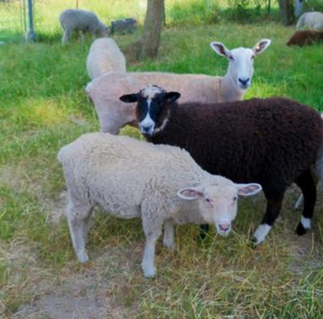 Heelside Farms