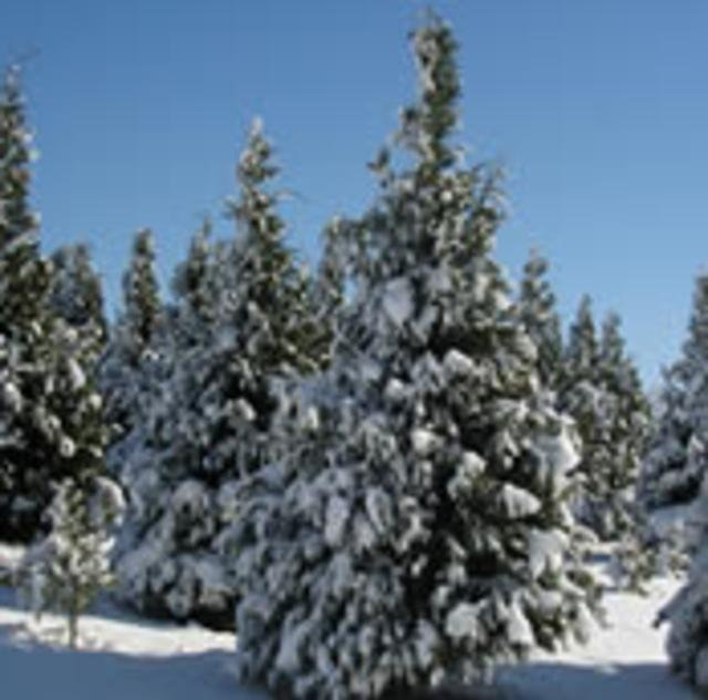 Mountain Branch Farm