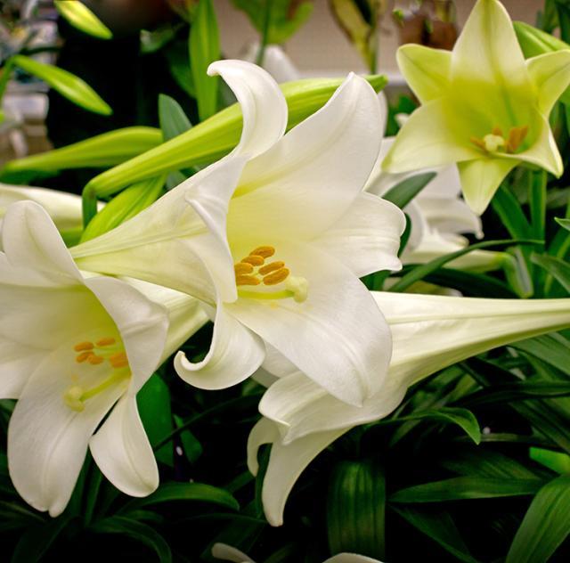 Benson Florist