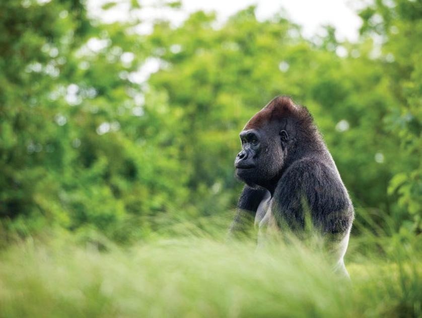 houston zoo for citypass