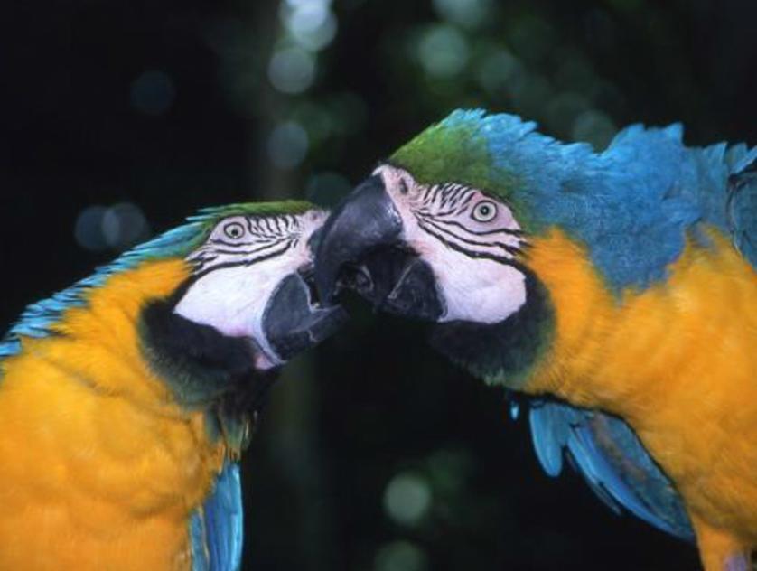 Moody Gardens - Parrots