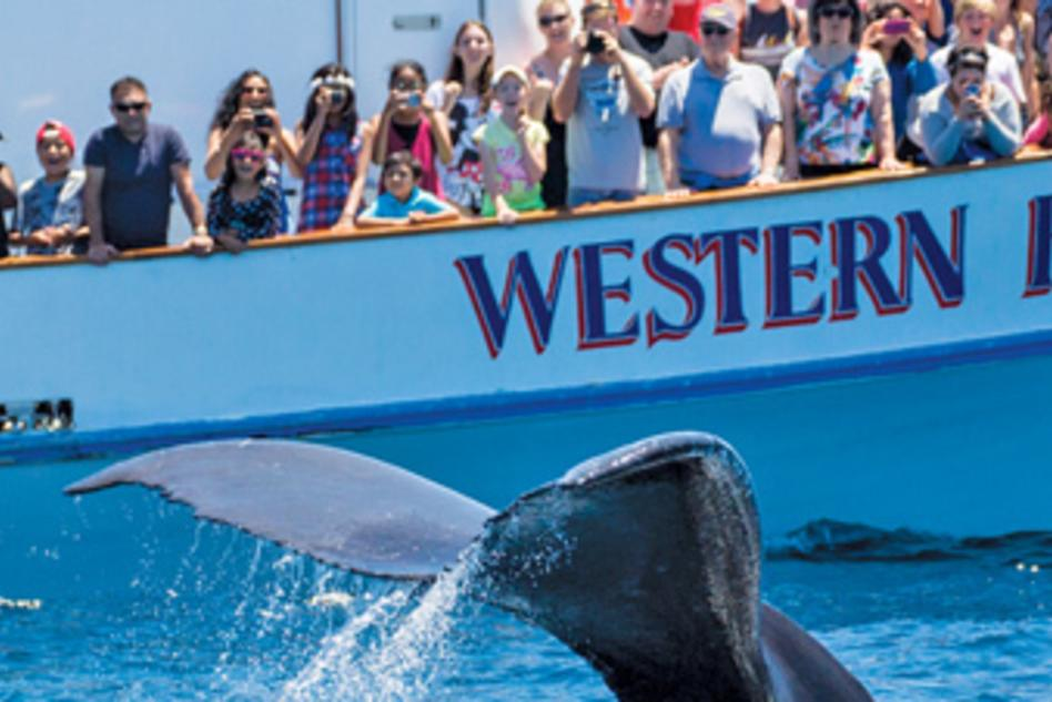 Whale watching event