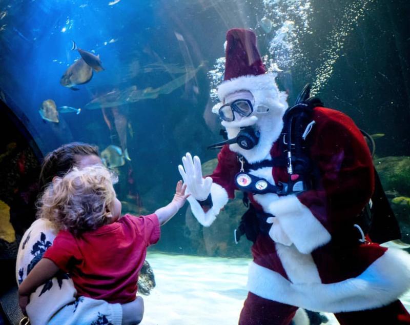 Scuba Santa at the Virginia Aquarium