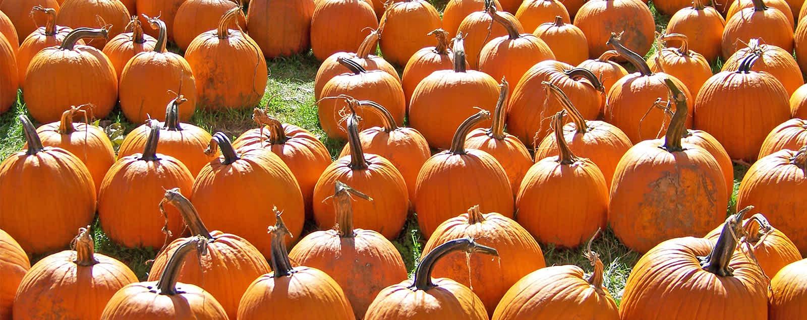 Best Pumpkin Patches For Fall 2020 Fairfax County Va