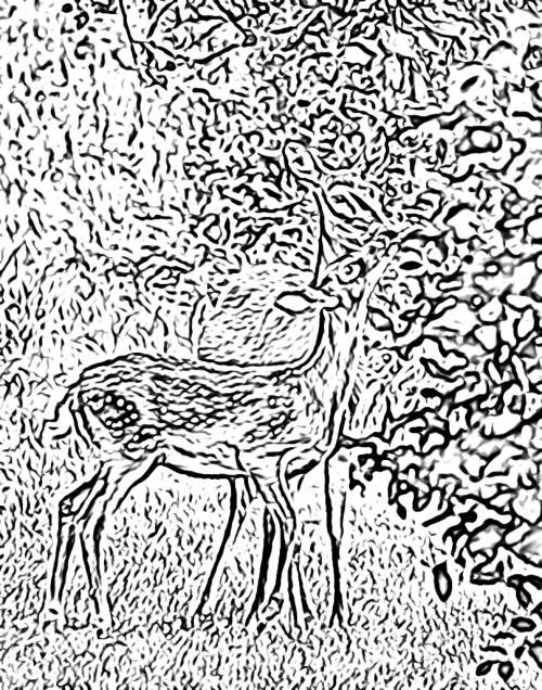Deer Kid