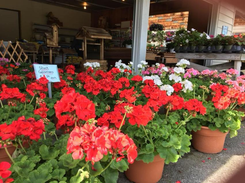 Flowers-Beacon-Farm-Market