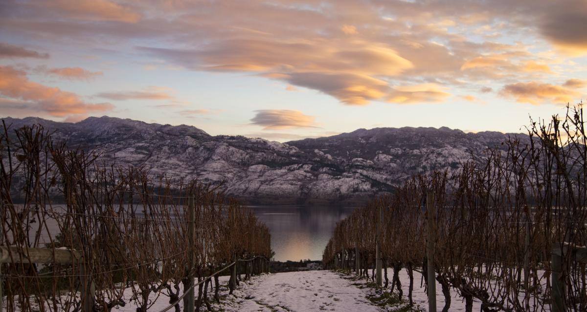 Winter in Wine Country - Mission Hill