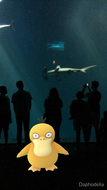 Pokemon at Monterey Bay Aquarium