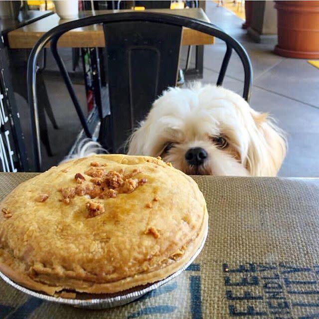 Pie-Not Dog