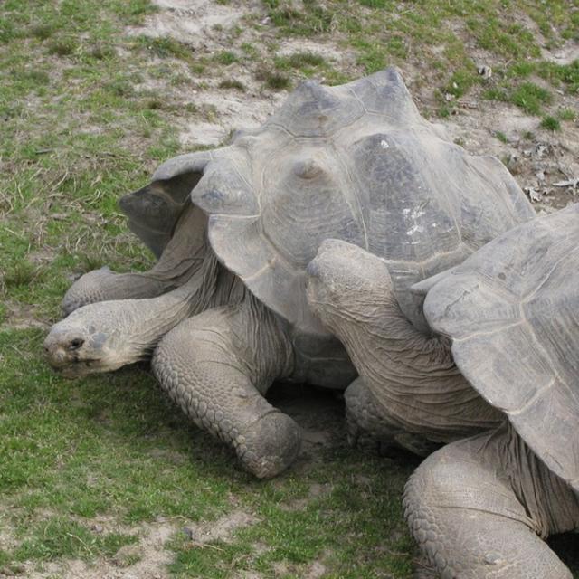 Metro Richmond Zoo Turtles