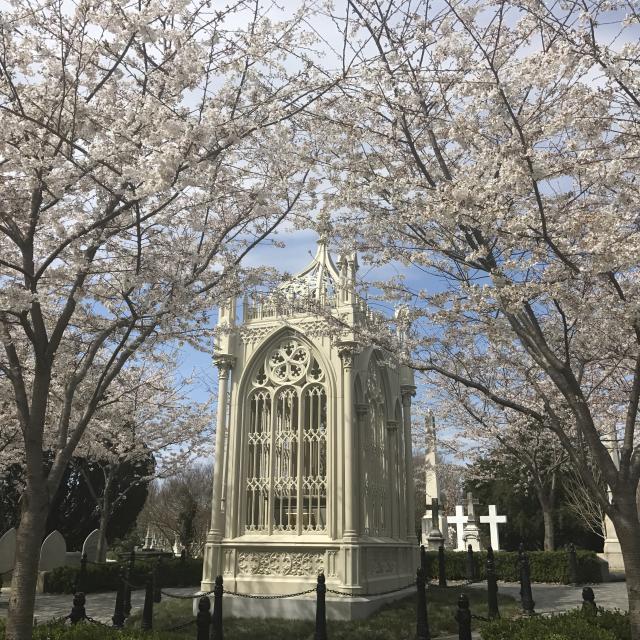 Springtime in Hollywood Cemetery