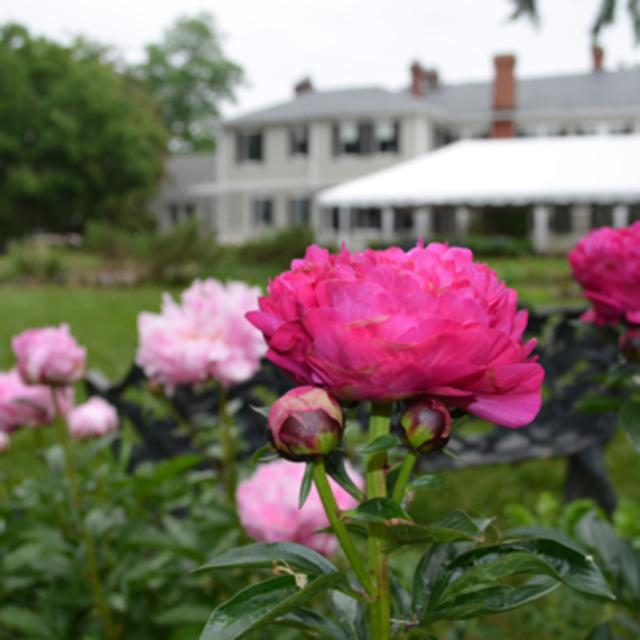 Peonies in front of Bloemendaal House