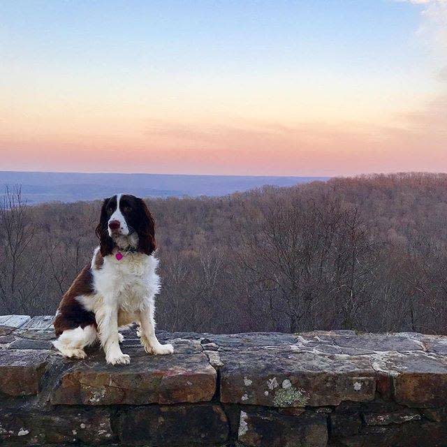 Dog at Monte Sano