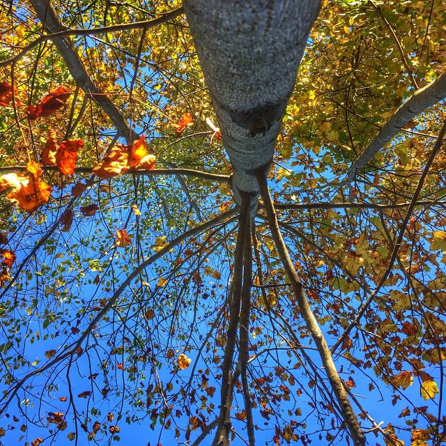 Looking Up at Fall - Fall Photo