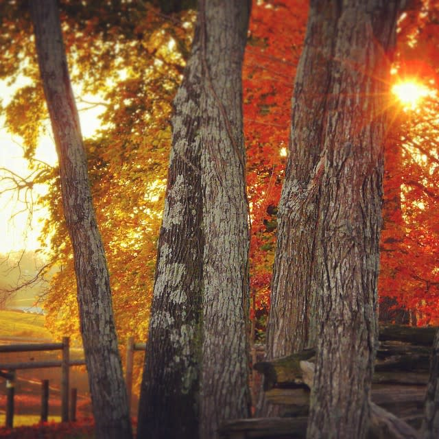 Fall Trees Blacksburg - Fall Photo