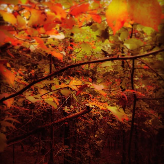 Fall Orange Leaves Mill Mountain - Fall Photo