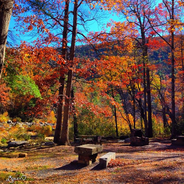 Picnic Area - Fall Photo