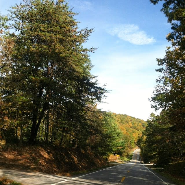 Pine Trees - Fall Photo