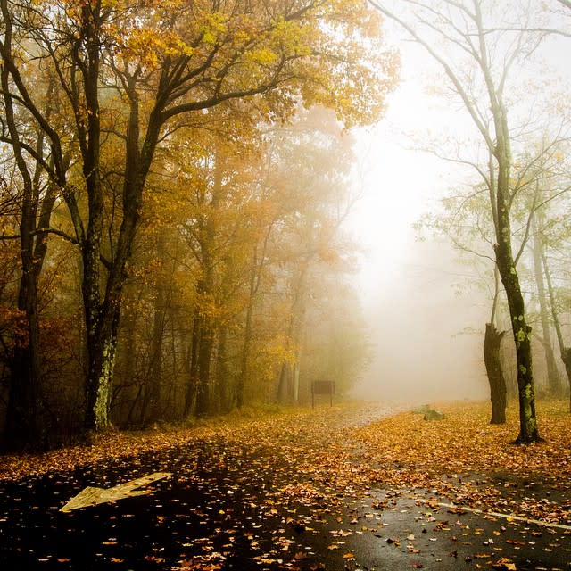 Foggy Road - Fall Photo