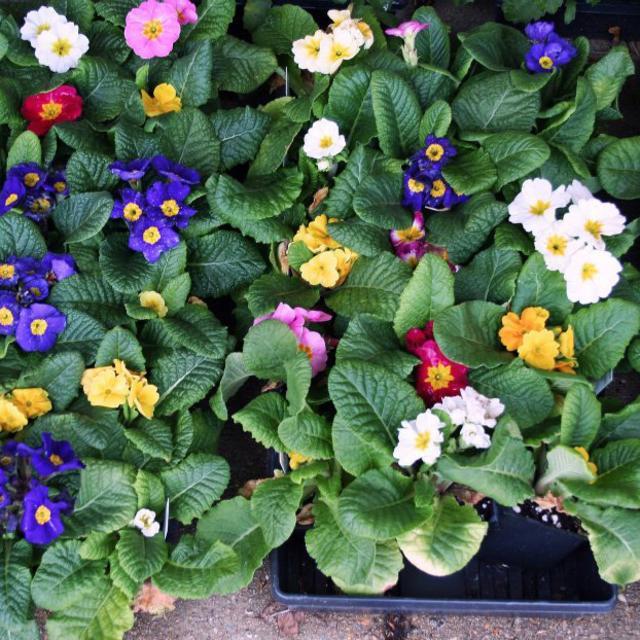 chesterfield berry farm - flowers