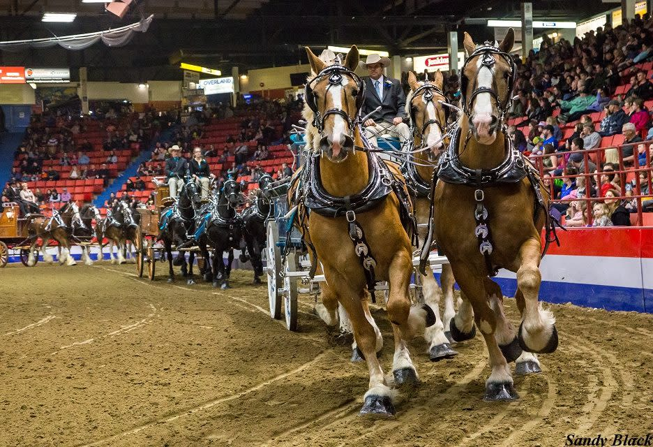 Royal Manitoba Winter Fair