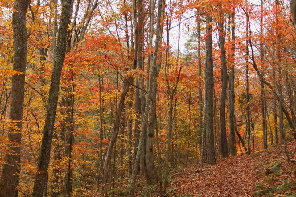 Rockbridge Canyon Trees
