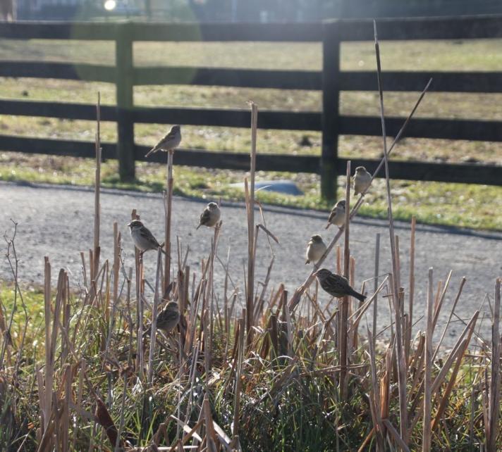 Birds at Frying Pan Farm Park