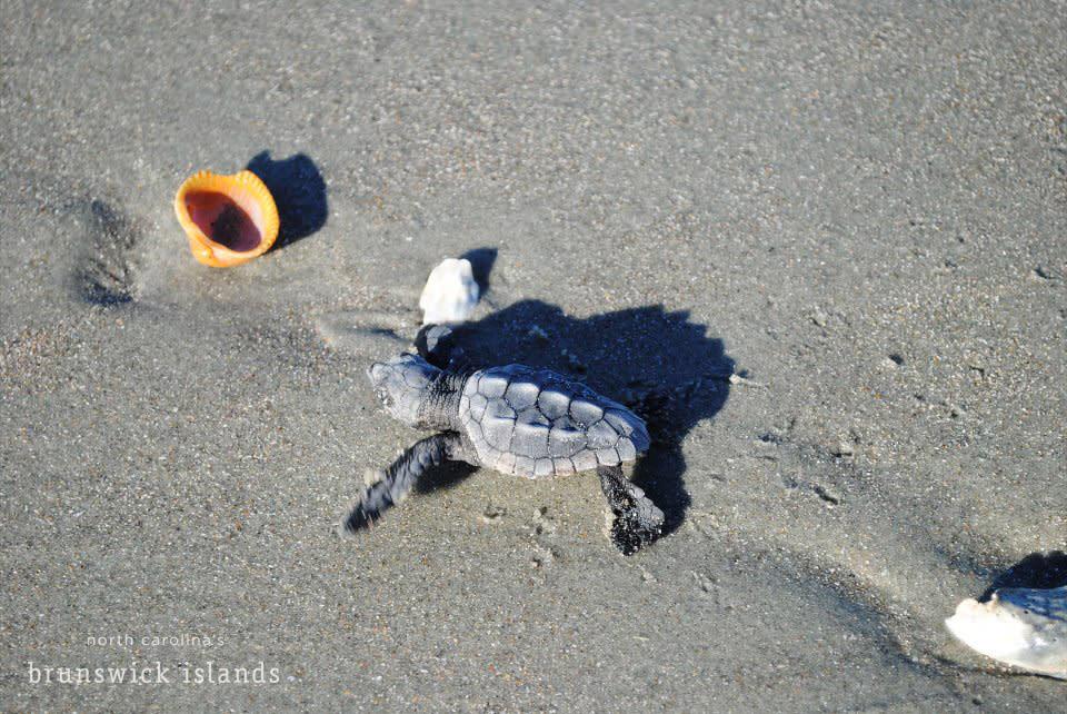 Sea-Turtles-3-Debra-Allen