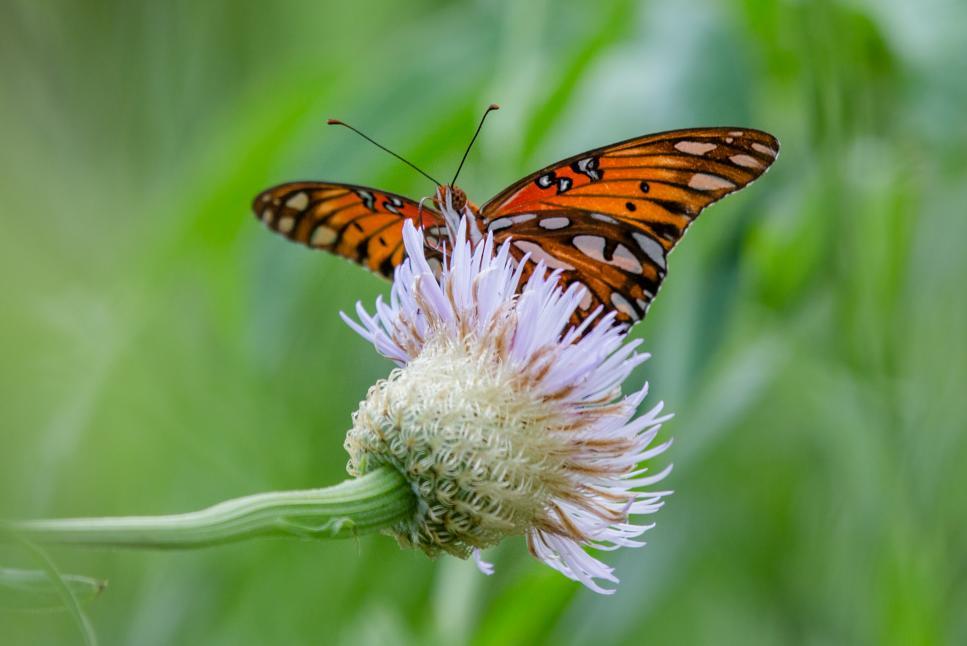 Houston Arboretum & Nature Center