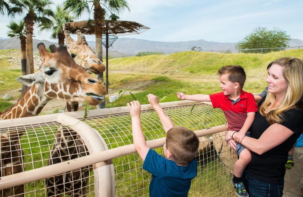 Children feeding a giraffe at The Living Desert