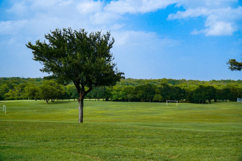 Buck Sansom Park