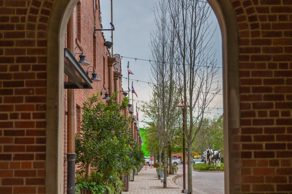 Mule Alley View