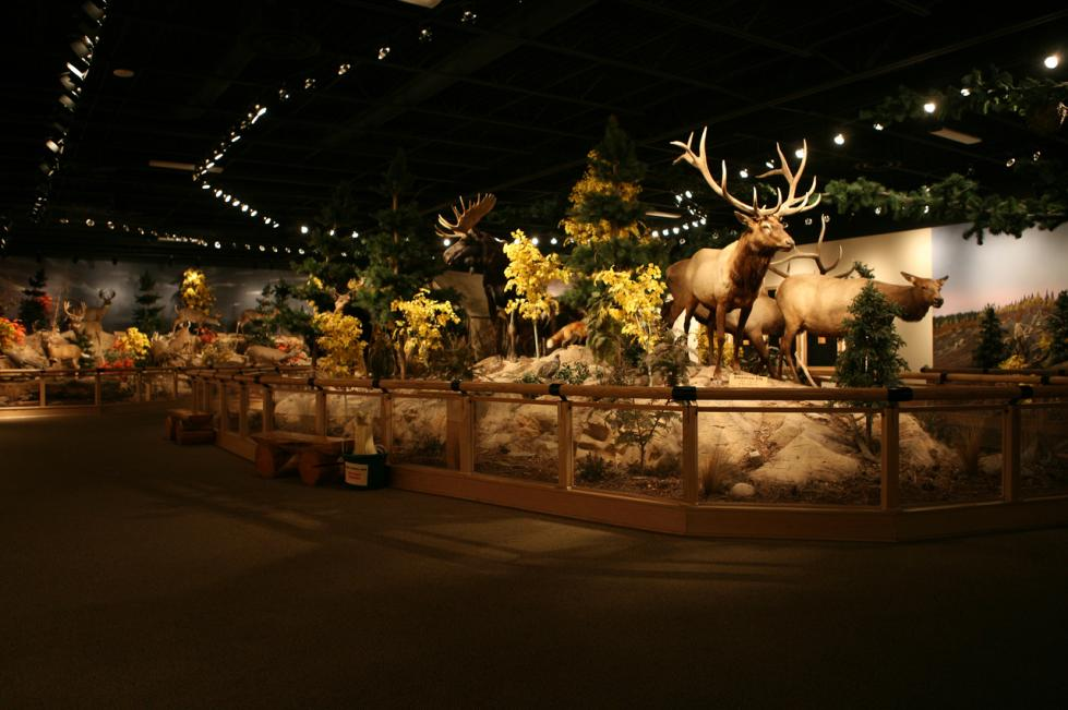 Cabela's Taxidermy Animal Display