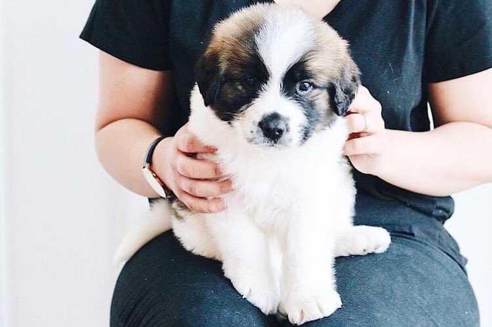 puppybarn2