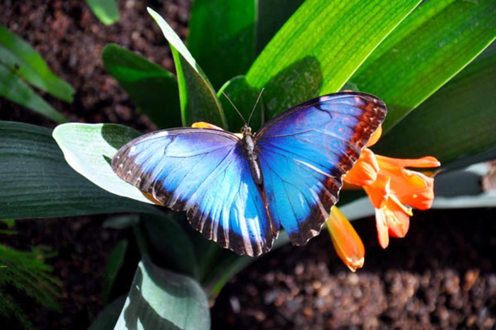 Butterfly Biosphere