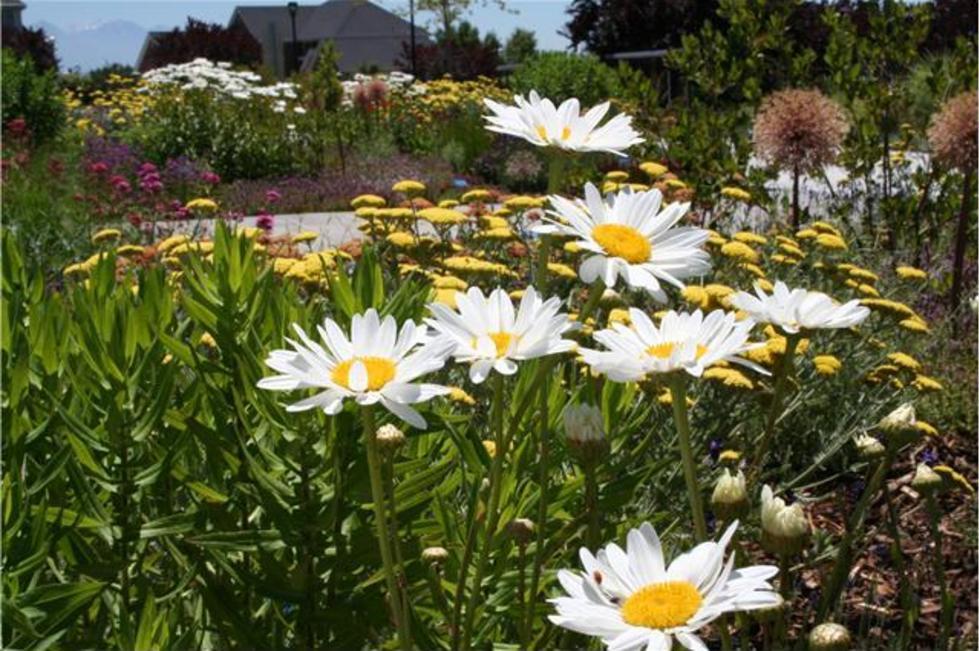 Central Utah Gardens 2