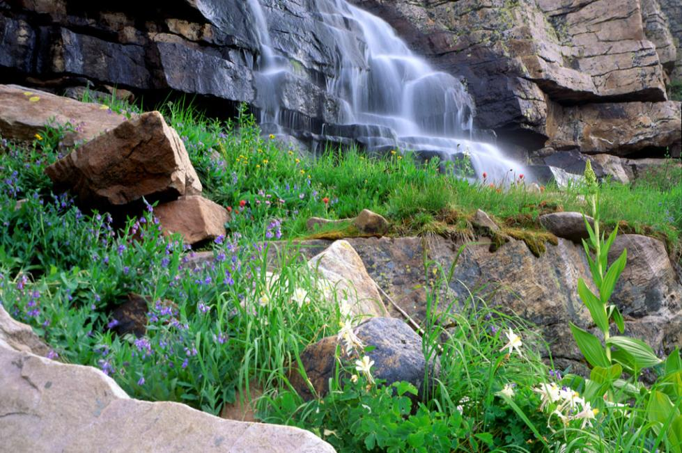Cascading Falls & Flowers