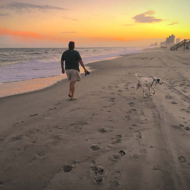 Dog walking at sunset on the beach