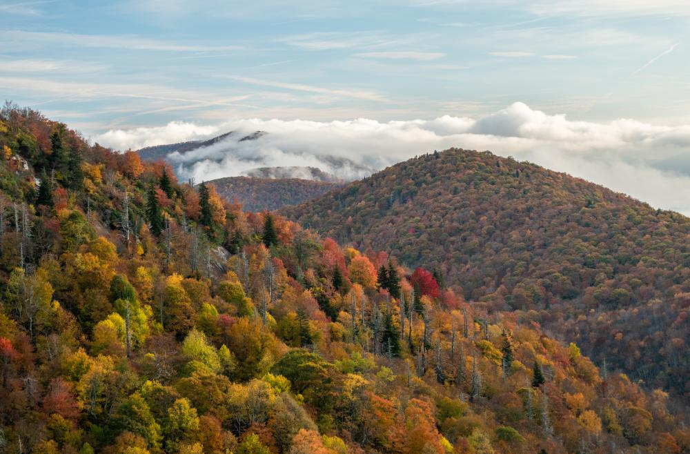 Fall color at East Fork Overlook on the Blue Ridge Parkway near Asheville, NC