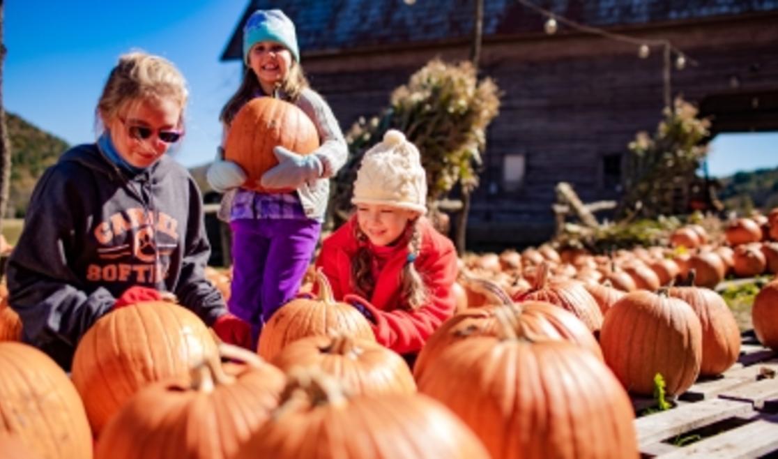 Pumpkin Patch at Harvest Farm