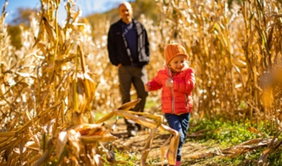 Running through the corn maze