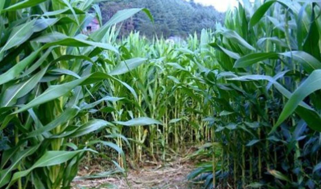 New River Corn Maze and Pumpkin Patch | Boone, NC