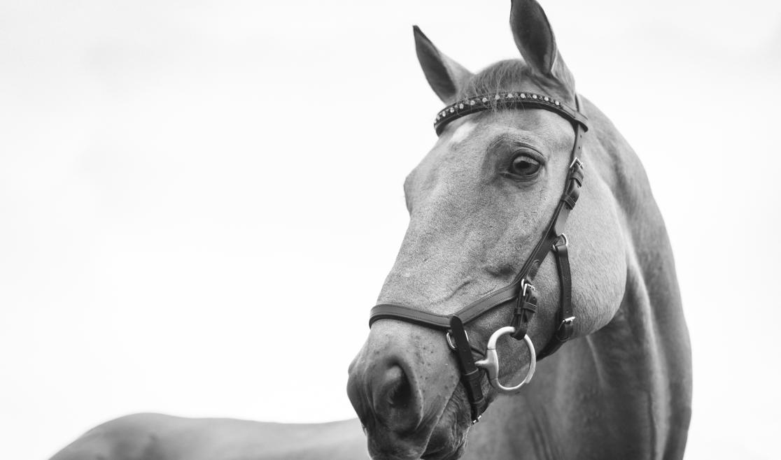 Grayscale Horse